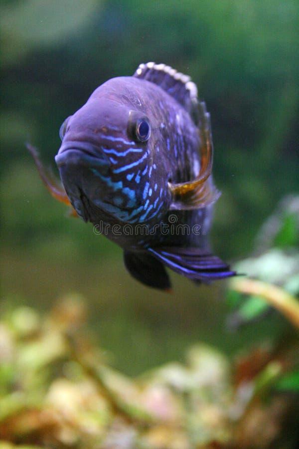 Download Aquarium stock image. Image of polkadots, ocean, fins - 7712091