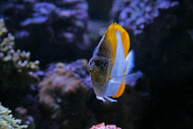 Aquarium stock foto