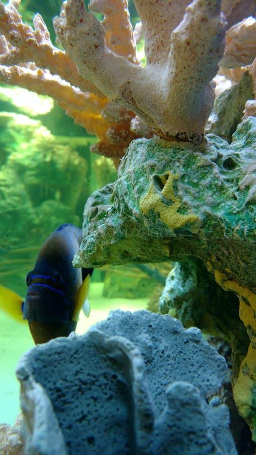 Aquarium au mail photos libres de droits