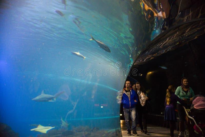 Aquarium auf dem modernen Zoo stilisierte nach Afrika stockbild