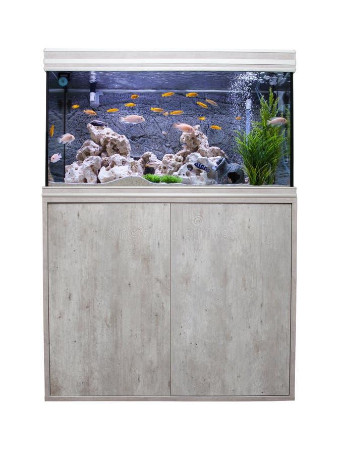 Aquarium avec des poissons de cichlids photo libre de droits