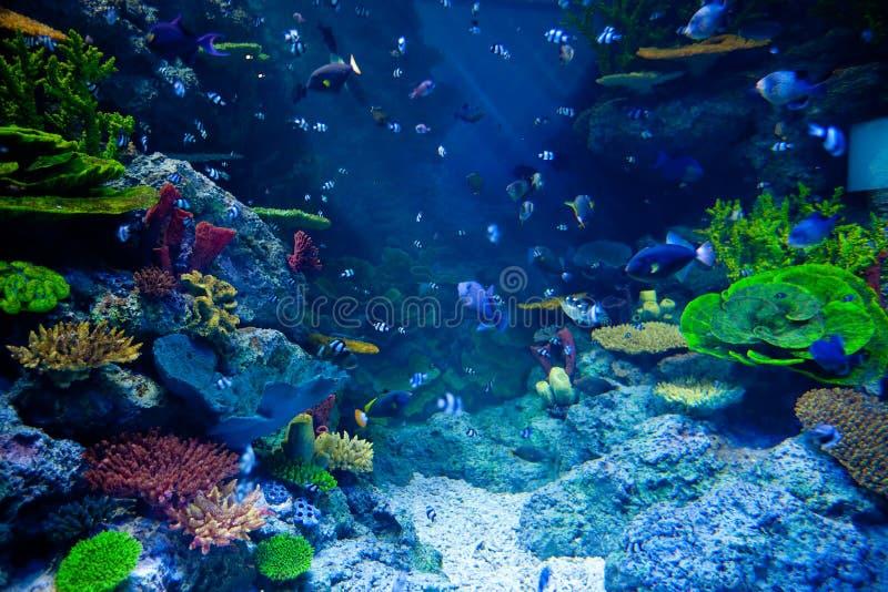 Aquarium avec les poissons tropicaux colorés et les beaux coraux photo libre de droits