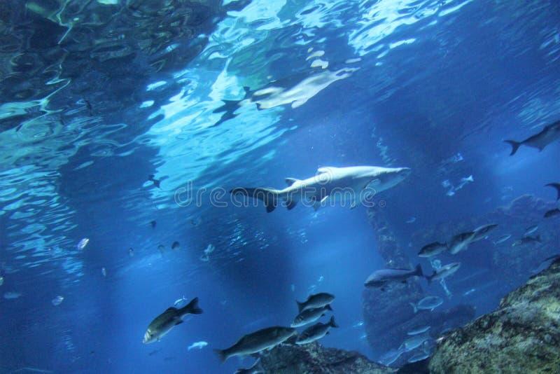 Aquarium in Barcelona, Spanje royalty-vrije stock afbeeldingen