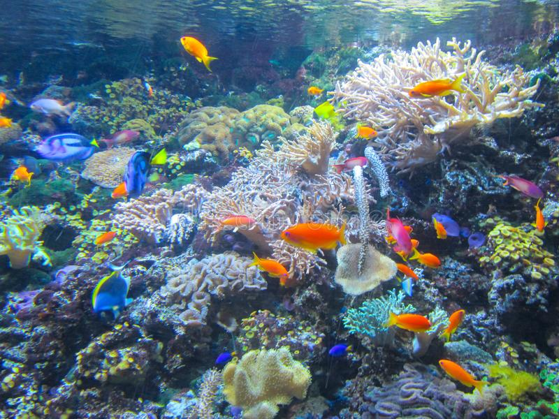 Aquarium with beautiful fish, plants and corals royalty free stock images