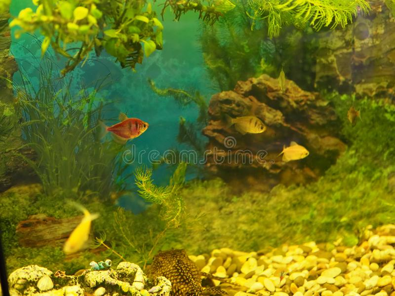 Aquarium colourfull fishes in dark deep blue water royalty free stock images
