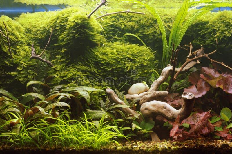 aquarium décoratif photographie stock libre de droits