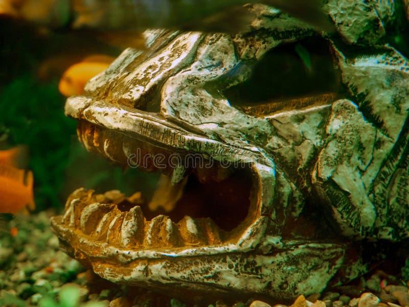 Aquarium d'Arabes photographie stock