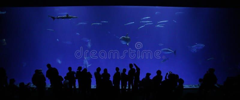 Aquarium de compartiment de Monterey images libres de droits