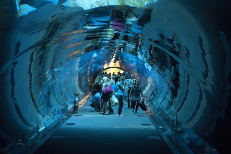 Aquarium de Dubaï chez Dubaimall images stock