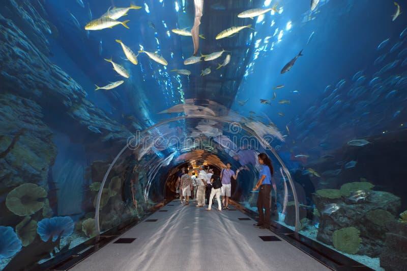 Aquarium de Dubaï chez Dubaimall images libres de droits