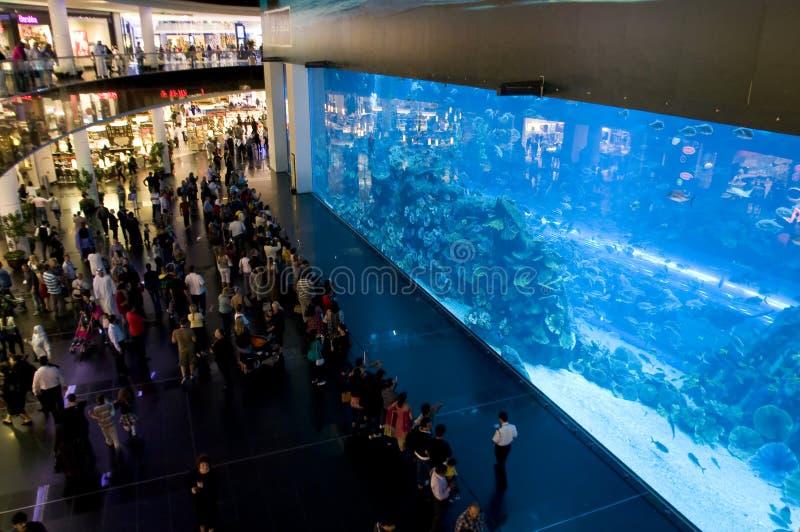 Aquarium de Dubaï dans le mail de Dubaï photos stock