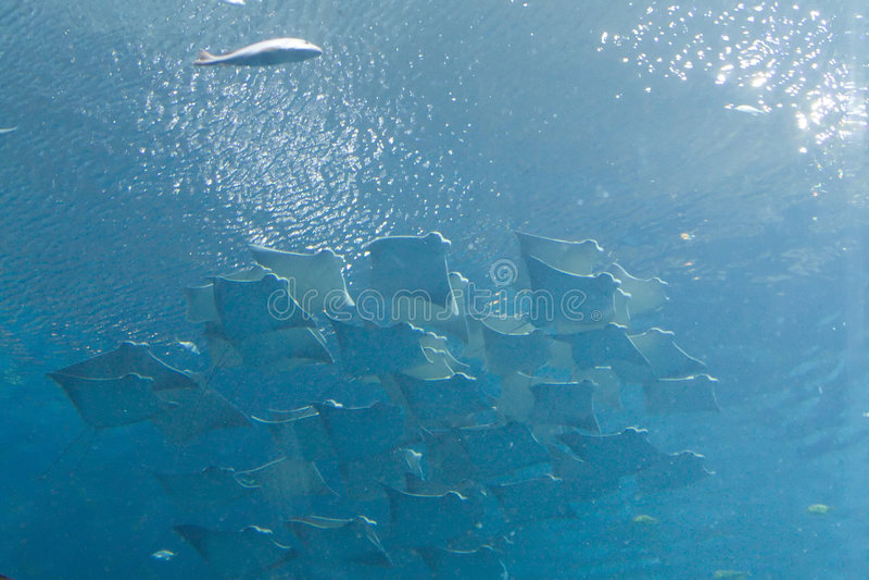 Aquarium de la Géorgie image libre de droits