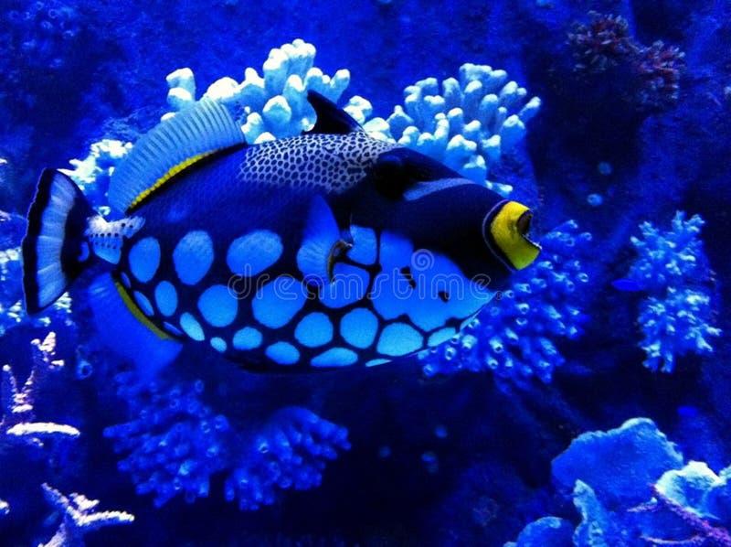 Aquarium de la Turquie Antalya photos libres de droits
