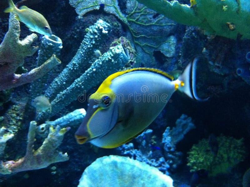 Aquarium de la Turquie Antalya photos stock