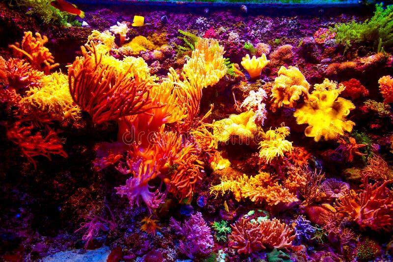 Aquarium de Singapour images stock