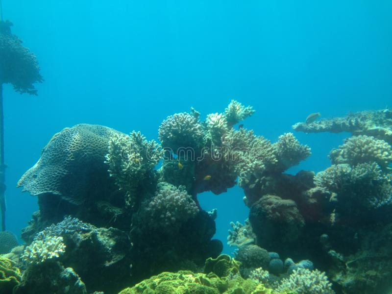 The Aquarium of Eilat royalty free stock photography