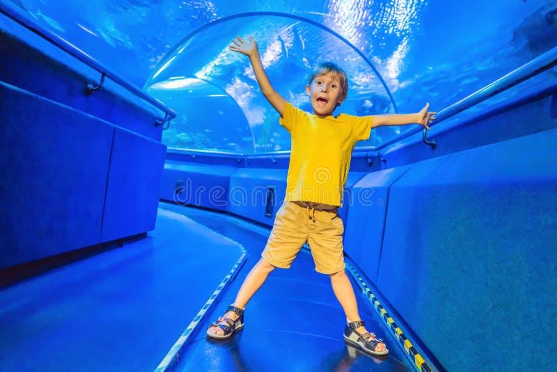 Aquarium en jongen, bezoek in oceanarium, onderwatertunnel en jong geitje, het wild onderwater binnen, aquatische aard, vissen stock afbeelding