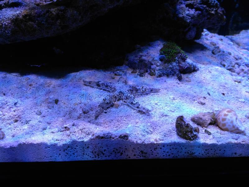 Aquarium en seastar stock afbeelding