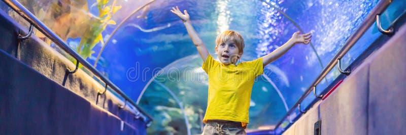 Aquarium et garçon, visite dans l'oceanarium, tunnel sous-marin et enfant, d'intérieur sous-marin de faune, nature aquatique, poi photographie stock