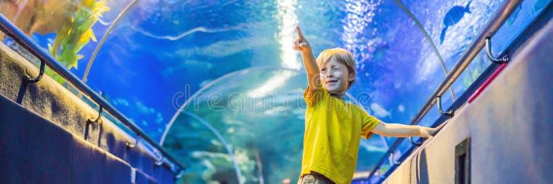Aquarium et garçon, visite dans l'oceanarium, tunnel sous-marin et enfant, d'intérieur sous-marin de faune, nature aquatique, poi photographie stock libre de droits