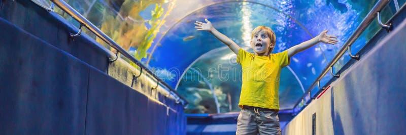 Aquarium et garçon, visite dans l'oceanarium, tunnel sous-marin et enfant, d'intérieur sous-marin de faune, nature aquatique, poi image stock