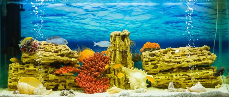 Aquarium with exotic fish (Аквариум с экзотиче stock photo