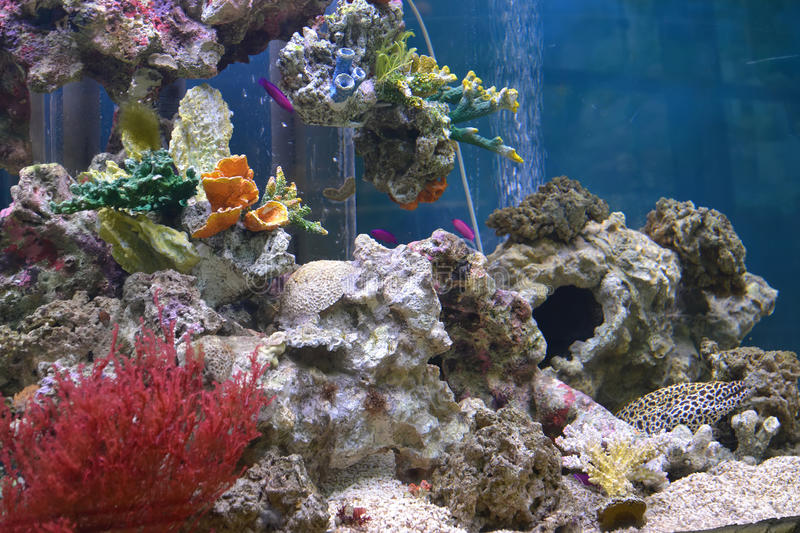 Aquarium with exotic fishes and corals royalty free stock photos