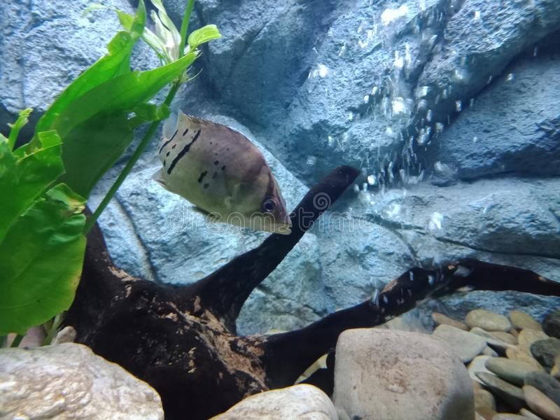 Aquarium-Fische 10 lizenzfreie stockbilder