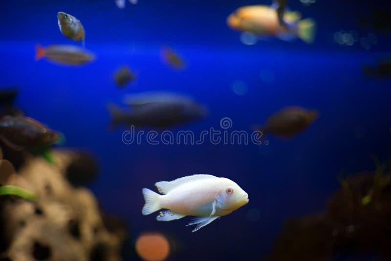 Download Aquarium fish stock image. Image of pisces, fresh, pets - 20436357