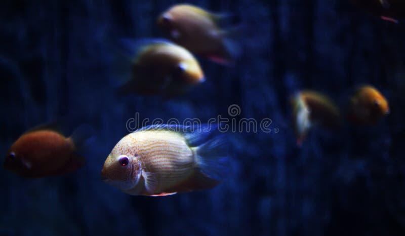 The aquarium fish stock image