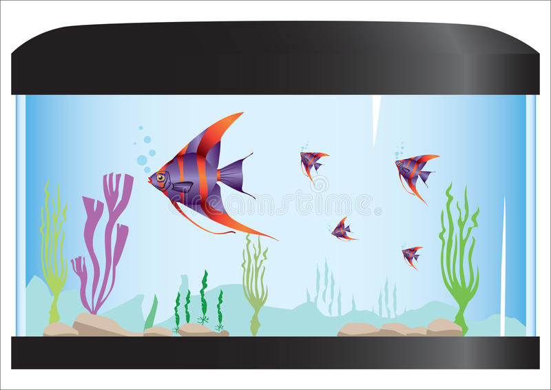 Aquarium stock photos