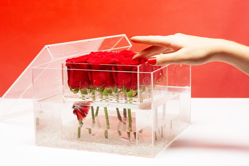 Aquarium with fish and roses. Flower shop. Love and passion. red rose bouquet in box. Valentines day present. Floral. Design. I love you so much. skincare royalty free stock photography