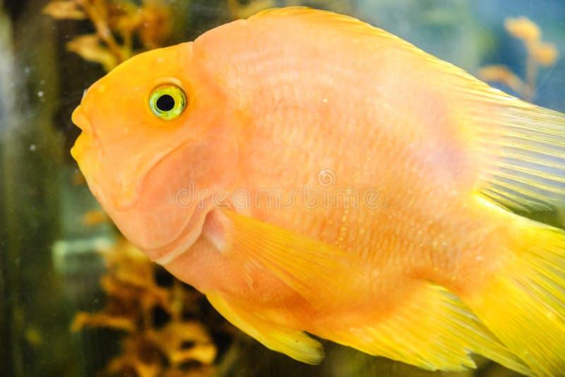 Aquarium fish tropical underwater animal, sea stock photo