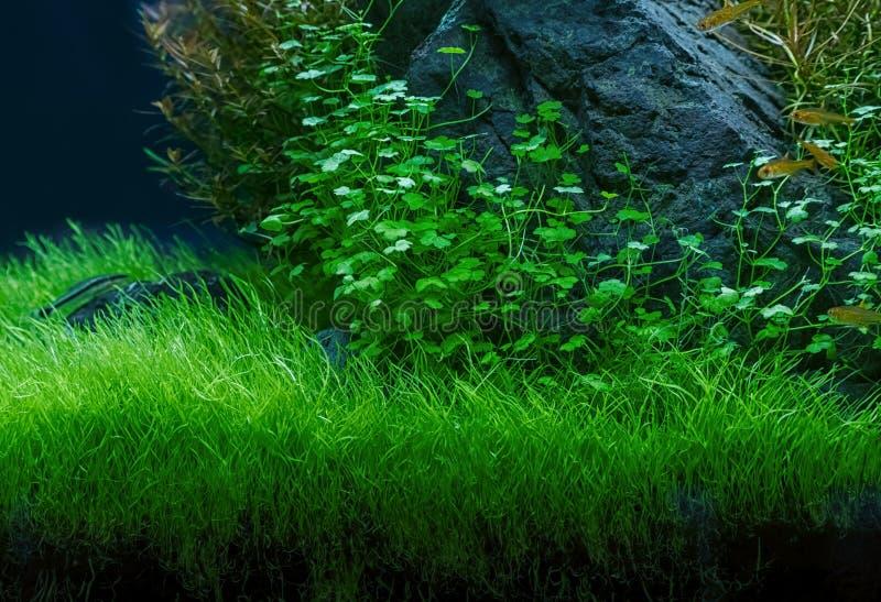 Aquarium groene installaties royalty-vrije stock afbeeldingen