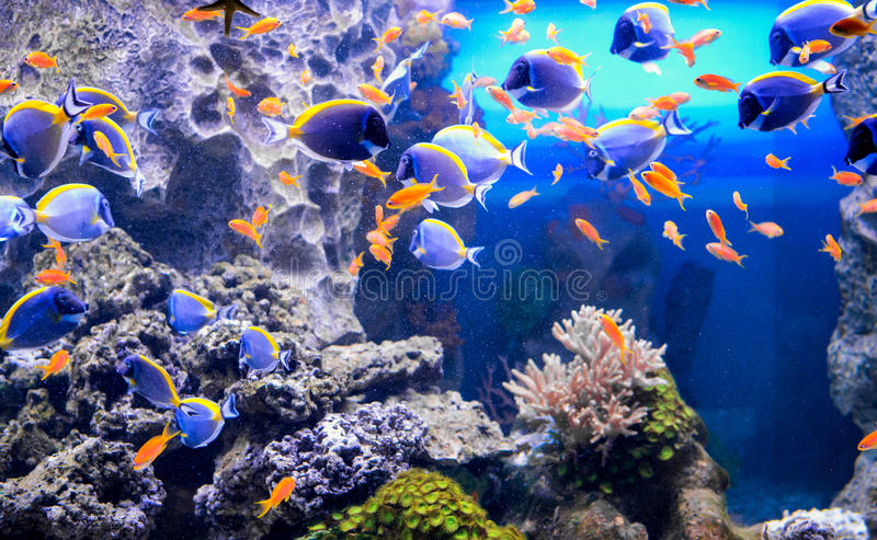 The aquarium inhabitants of the underwater world stock images