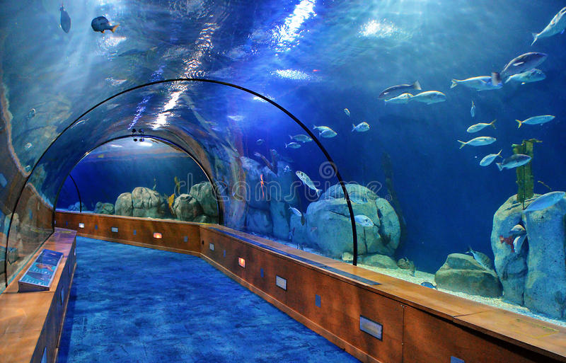 Glass tunnel in Oceanografic aquarium. In Valencia Spain royalty free stock images