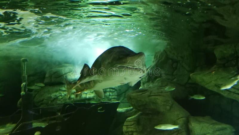 Aquarium stock images