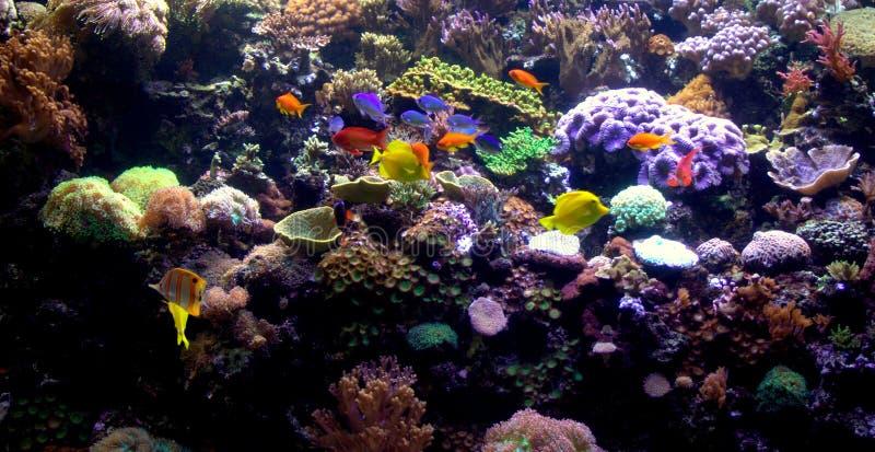 Aquarium-Koralle u. Fische lizenzfreie stockbilder