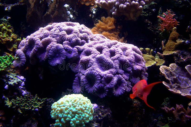 Aquarium-Koralle u. Fische lizenzfreie stockfotografie