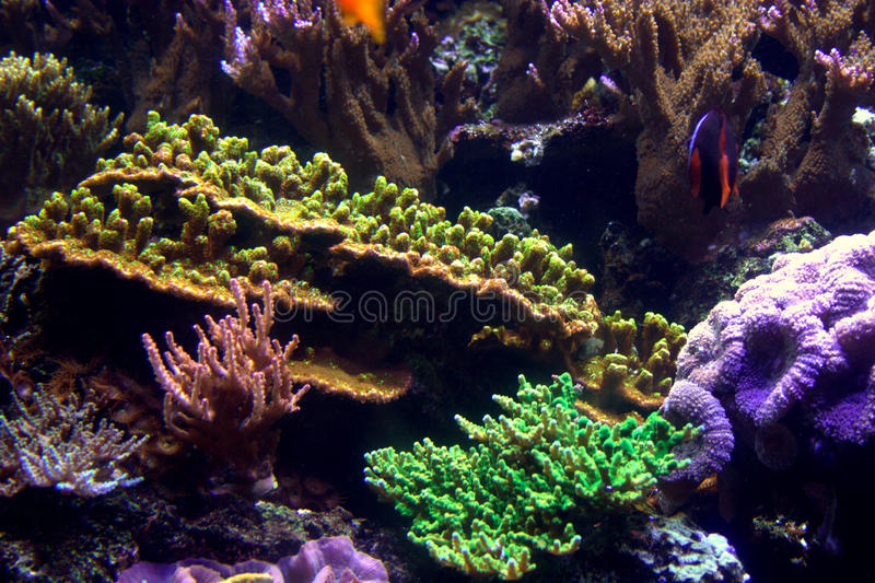Aquarium-Koralle u. Fische lizenzfreies stockfoto