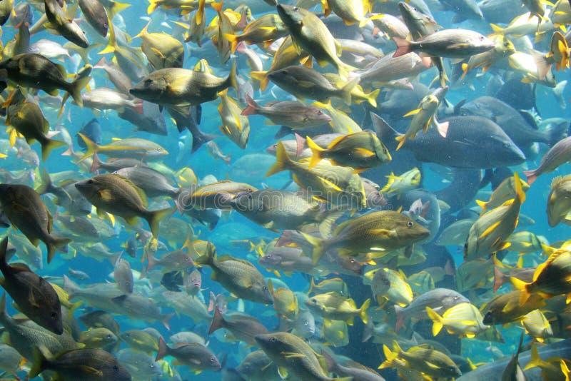 Aquarium life royalty free stock images