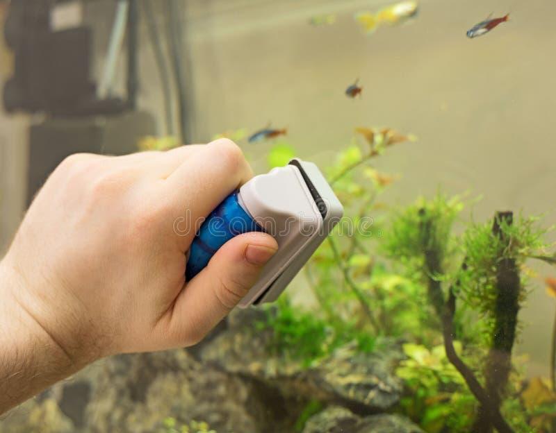 Aquarium masculin de nettoyage de main images libres de droits