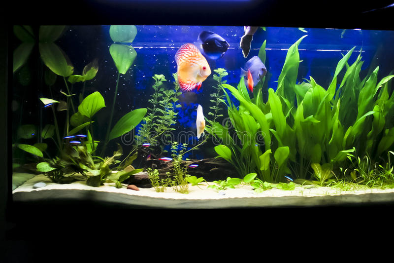 Aquarium met sommige tropische fisches royalty-vrije stock foto's