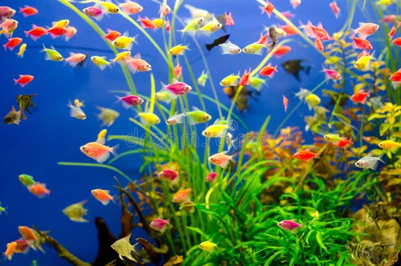 Aquarium met vele gekleurde vissen stock foto's