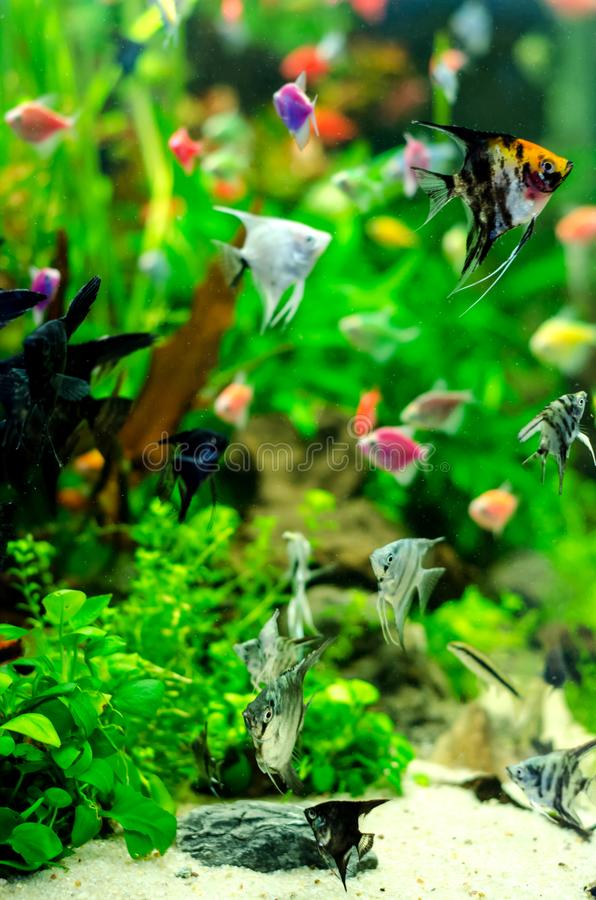 Aquarium met vele gekleurde vissen royalty-vrije stock foto