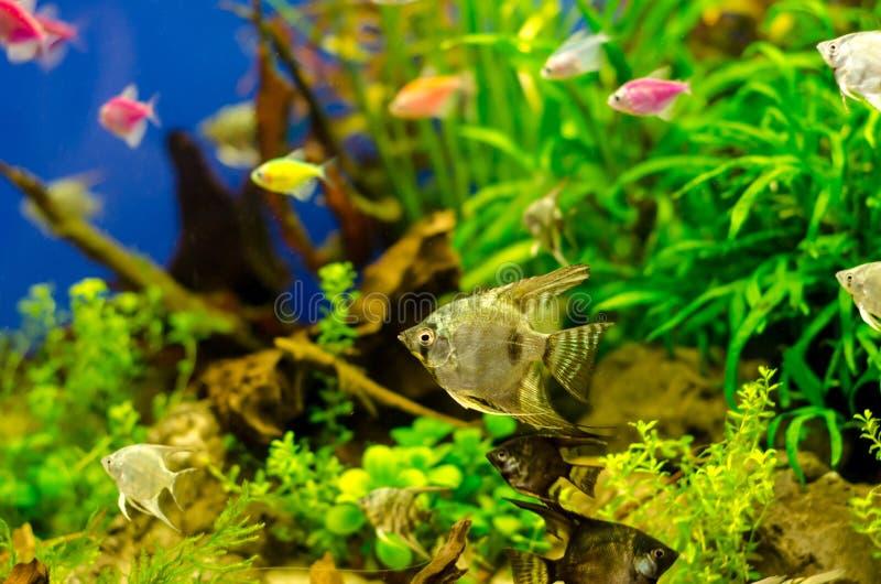 Aquarium met vele gekleurde vissen royalty-vrije stock afbeeldingen