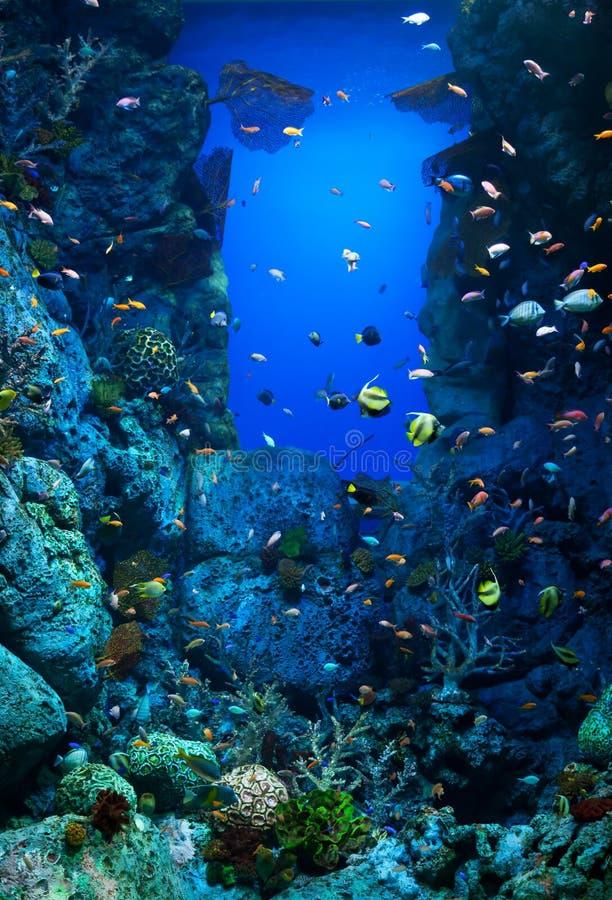 Aquarium met vele verscheidenheden van koralen en kleurrijke mariene vissen stock afbeelding