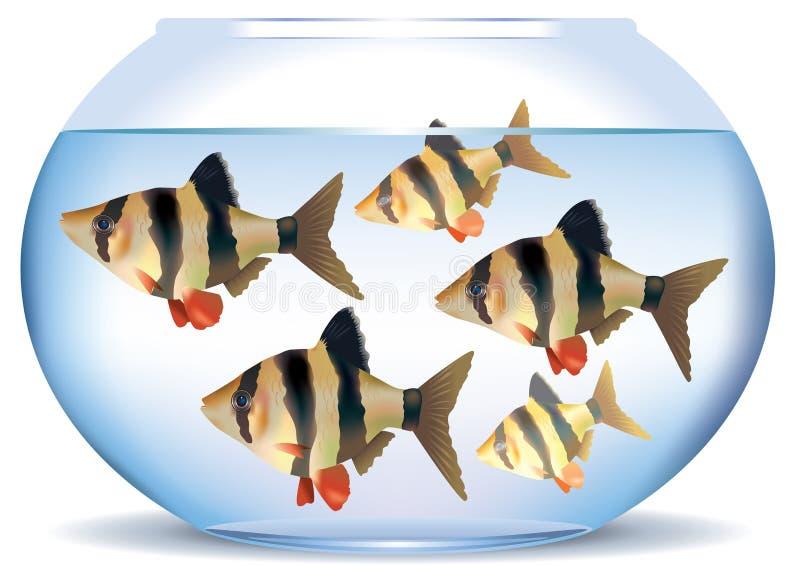 Aquarium met vissen royalty-vrije illustratie