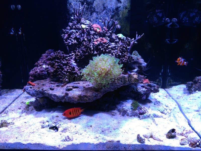 Aquarium met vissen royalty-vrije stock foto