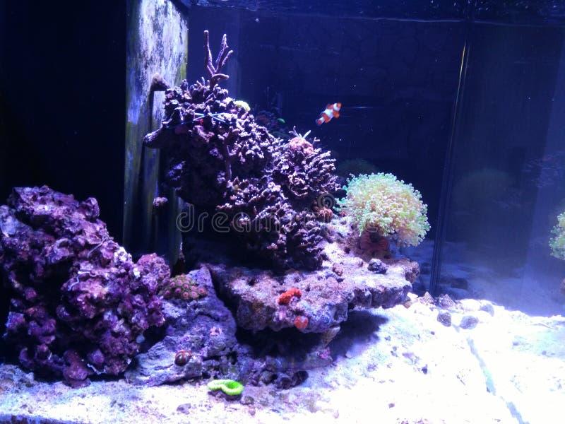 Aquarium met vissen stock foto's
